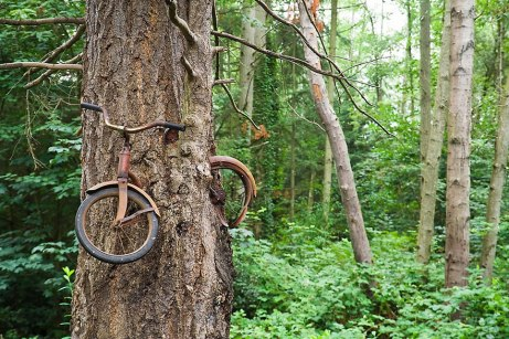 Ethan Welty bicycle eaten by tree