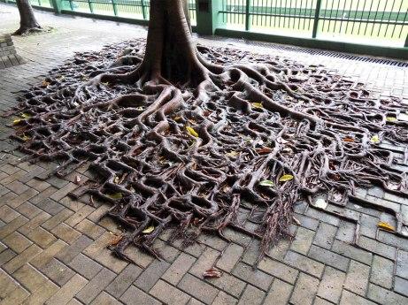worldbeyondyourown roots sidewalk